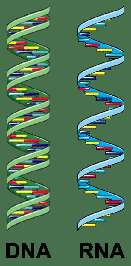 dnarna | Bürgertest, Schnelltest & PCR-Test | Medicare Covid-Testzentrum